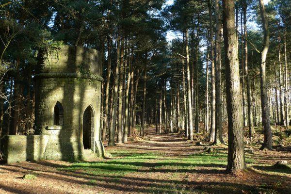 Cottingley Woods - St Davids Folly